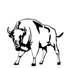 black and white aurochs vector illustration