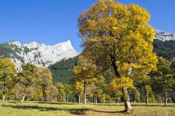 Tirol, Großer Ahornboden