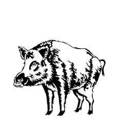 black and white boar vector illustration