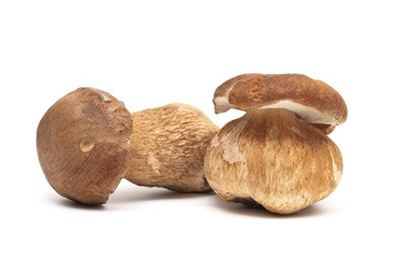 Two fresh mushrooms closeup on white background