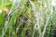Leinwanddruck Bild - Spinnennetz mit Morgentau :)