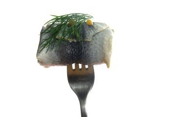 collared herring