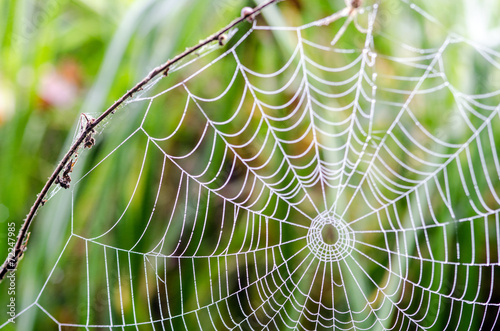 Leinwanddruck Bild Spinnennetz mit Morgentau :)