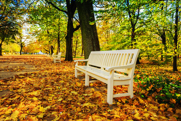 Autumn - bench in autumn park