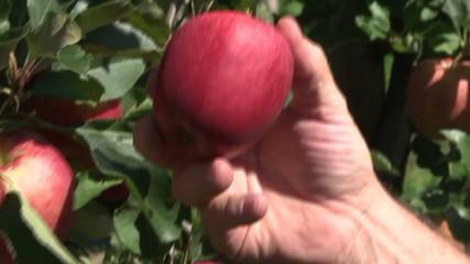 Roten Apfel Pflücken