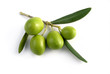 little branch of olives isolated - 72251124