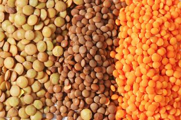 Lentil varieties
