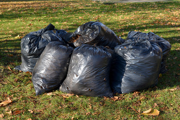 Black plastic bags with the fallen-down foliage lie on a grass