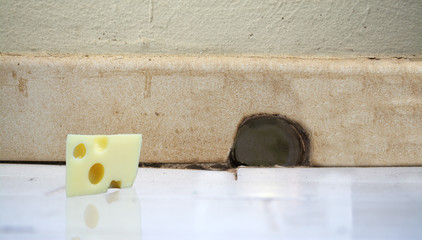 piece of cheese in front of a mouse hole