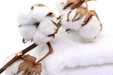 Baumwolle Stoff