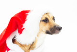Portrait of cute mutts in red Santa hats poster