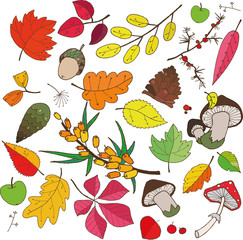 autumn collection of objects of different color leaves
