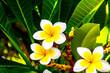 canvas print picture - Fleur