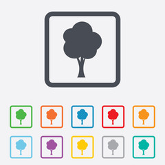 Tree sign icon. Forest symbol.