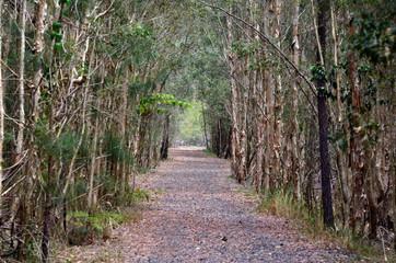 Trees track path