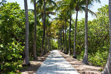 Walkway lined with palm trees