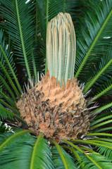 Tropical Plant background texture