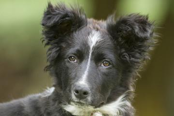 Perro - Can - Cachorro