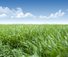 Green grass and  clouds in blue sky