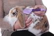 femme brossant lapin bélier nain