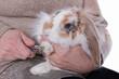 femme coupant ongles lapin nain