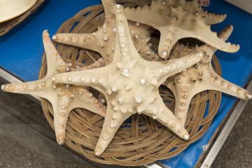 Estrellas de mar 2.