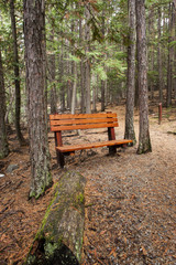 Park Bench in forest.