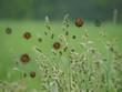 pollen im anflug
