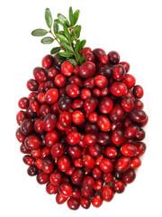 Cranberries - Beere