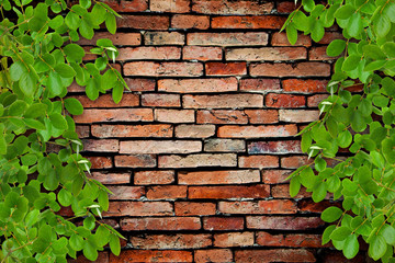 old brick wall and the tree