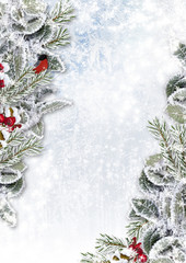 Christmas background with snowy branches and bullfinch