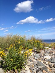 goldenrod flowers and rocks beside the ocean