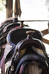 Horse saddles laid in row