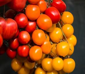 Freshly picked organic tomatoes