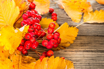 Fall still life with whitethorn