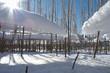 canvas print picture - Schilf mit Eis, Schnee, blauem Himmel und der Sonnen als Gegenli