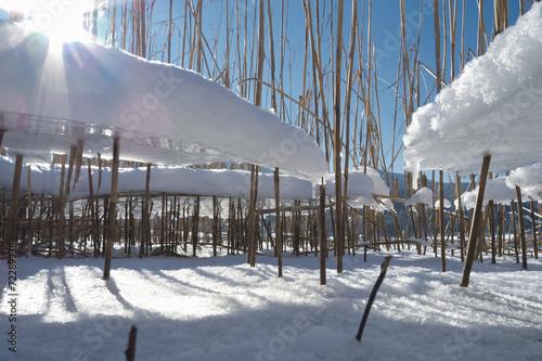 canvas print picture Schilf mit Eis, Schnee, blauem Himmel und der Sonnen als Gegenli