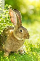 Brown rabbit near bush