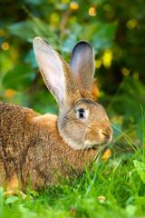 Brown rabbit sitting in flower garden