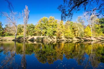 Sonniger Herbsttag im Wald