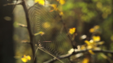 web with spider in autumn grass