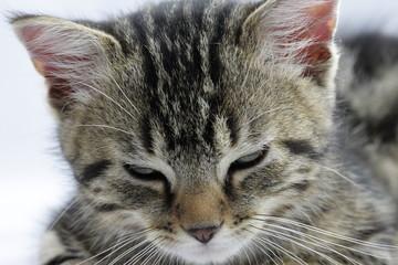 Chaton en train de dormir