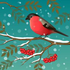 Bullfinch on a branch. Vector illustration.