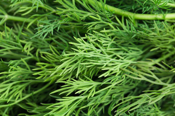 Close up of fresh dill herb.