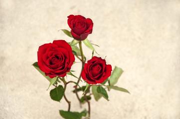 Three roses on a sandy background