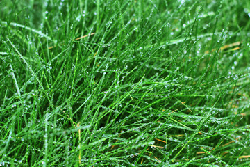 grass lawn leaf ecology rain drops background