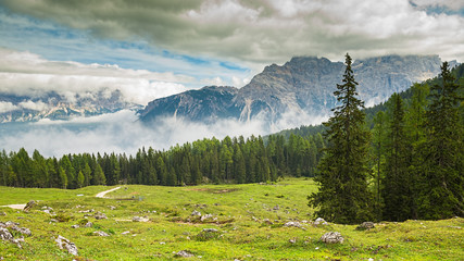 taly, Dolomites - a wonderful landscape, meadow among pine