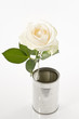 One white rose in a tin old can over white