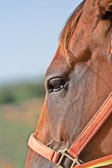 Cavallo dettaglio profilo