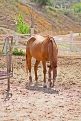Cavallo in piedi